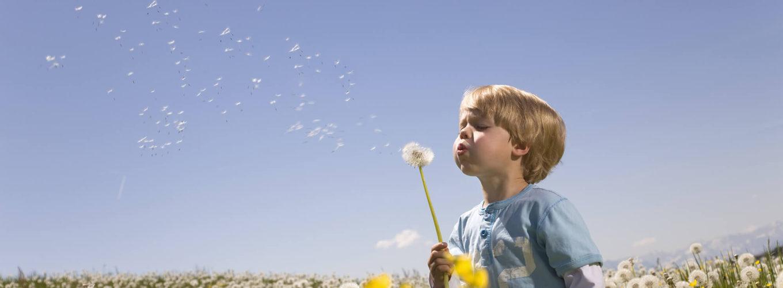 Kleiner Junge auf Blumenwiese zwischen Pusteblumen und Raps der eine Pusteblume pustet. er trägt ein blaues T-Shirt über einem weißen Sweatshirt und eine dunkle Hose. Er ist ca zwischen 3 und 6 Jahre alt.